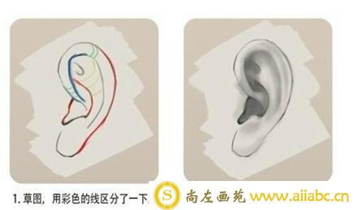 CG插画入门:耳朵CG插画教程