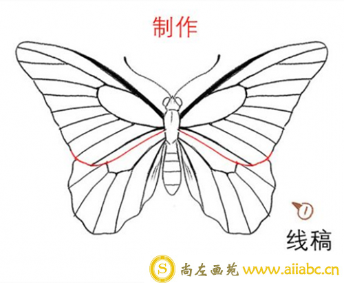 PS蝴蝶的画法