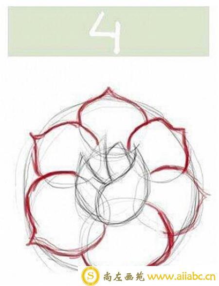 手绘玫瑰花教程:手绘玫瑰花线稿步骤图