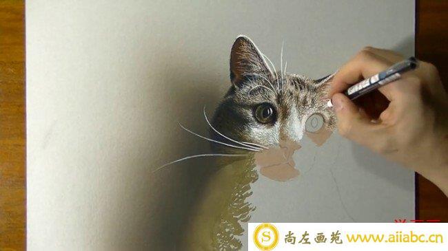 【视频】超写实的彩铅猫咪彩铅手绘教程步骤绘画方法 结合水彩高光笔喷枪_
