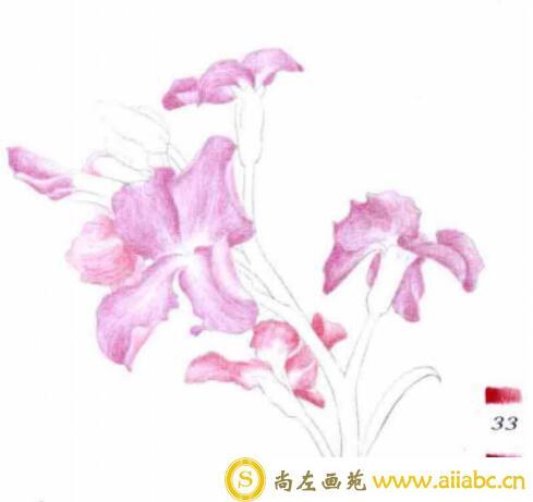 彩铅画紫罗兰的步骤