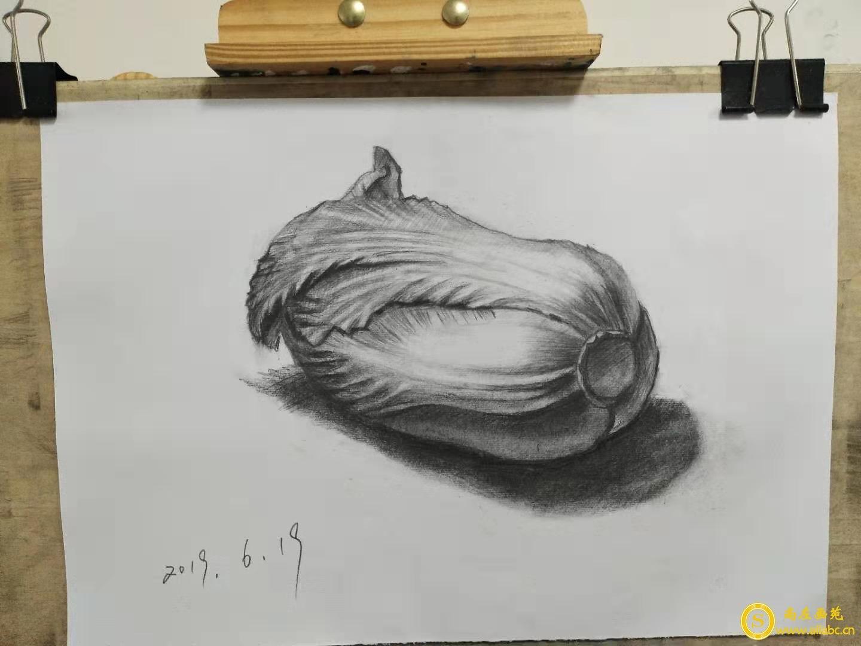 素描白菜画